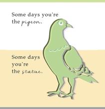 SH_Pigeon